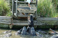 Entrance to Alligator Adventure